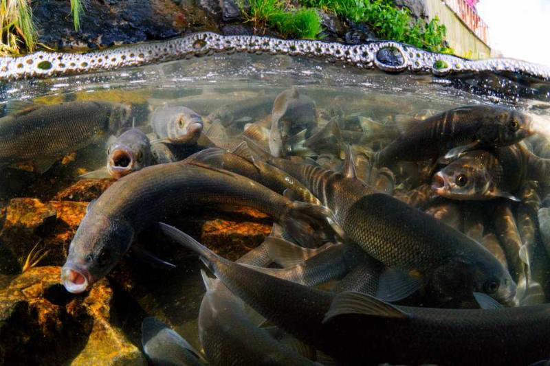 Van Gölü'ndeki kuraklık tehlikesi uydu görüntülerinde!